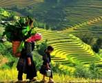 Hoang Su Phi Trekking Tour – 5 Days 4 Nights